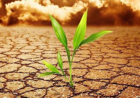 土壤修復與重金屬處理領域